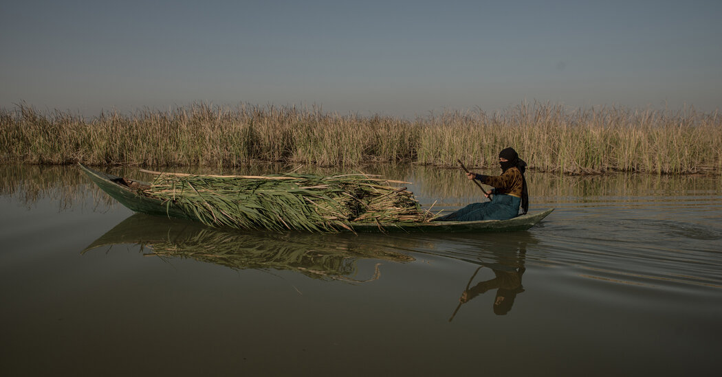 Drought and Abundance in the Mesopotamian Marshes